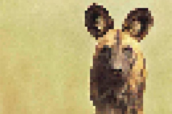 These Pics Are Composed Of As Many Pixels As There Are Animals Still Alive In These Species