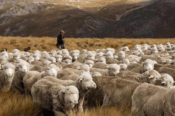 Buy A Jumper, Adopt A Sheep From This Carbon-Negative Clothing Company