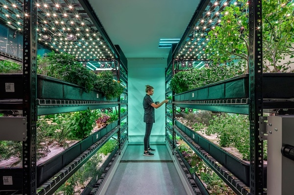 Can Vertical Farms Reap Their Harvest? It's Anyone's Bet.
