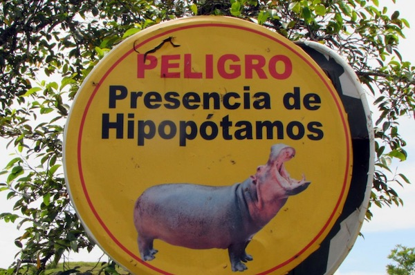 Chasing Colombia's 'Cocaine Hippos'