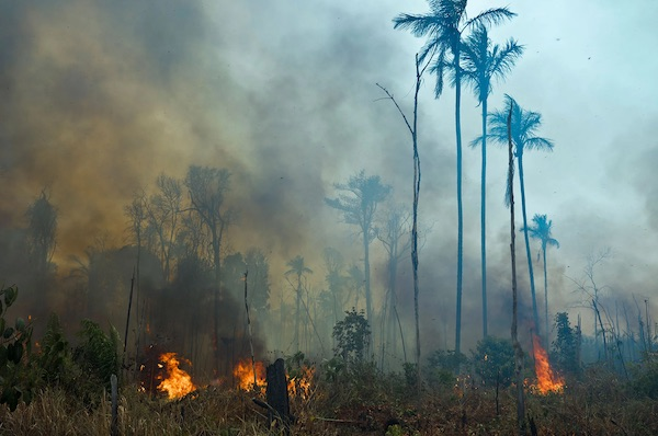 As Fires Rage In The Amazon, Brazil Massacres Activists Trying To Save The Rain Forest