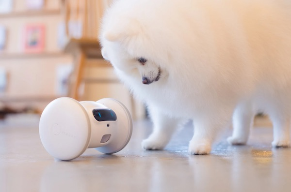 VARRAM Pet Fitness Robot Interactive Toy for Cats & Dogs