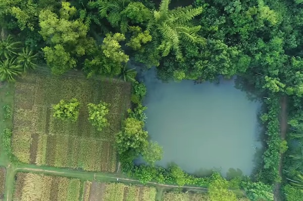 How A Farmer Turned 90 Acres Of Wasteland Into A Lush Green Forest
